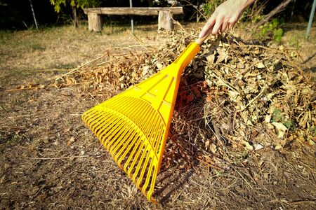 Hand racking dry leaves with yellow racks in the garden Stock fotó - 129074491