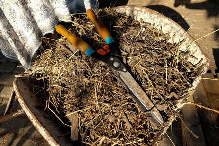 Shears in the heap of dry straw in the barrow