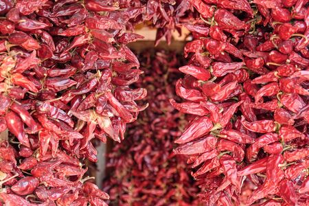 Bunch of red dry hot chili paprika in the bright sun