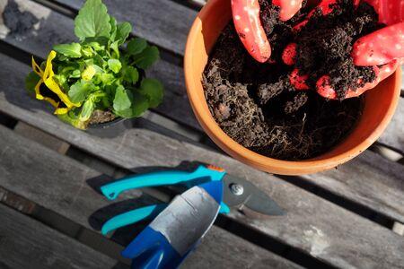 Hands in red gardening gloves putting soil in pot