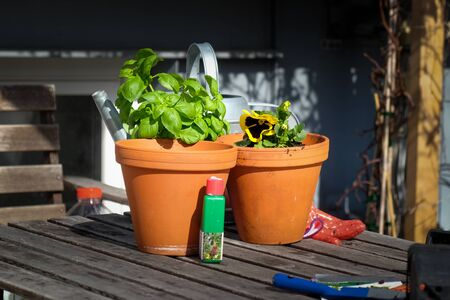 Two clay pots, gloves and gardening tools on the wooden table