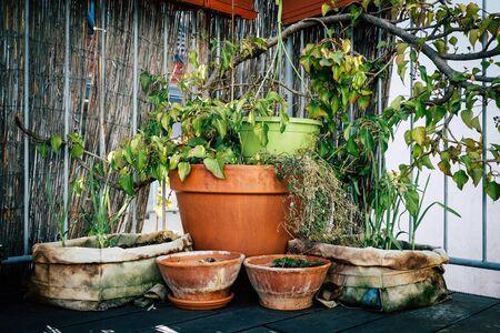 Rustic clay pots and planters in urban garden