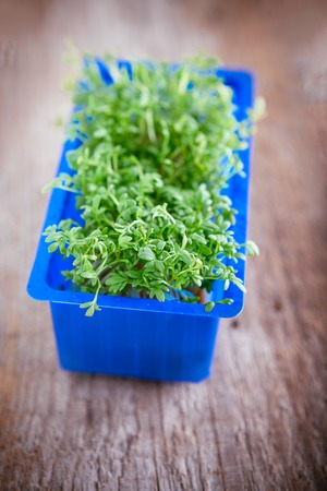 Fresh edible healthy water cress in the box. Stock Photo