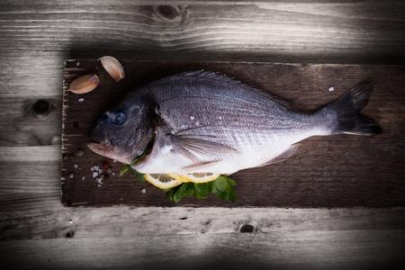 sea bream: Sea Bream fish Dorade