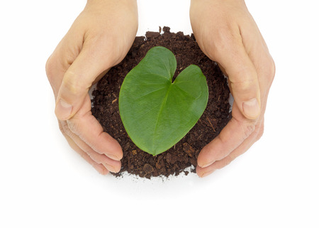 Man hands protecting heart shaped leaf over dirt isolated on white background