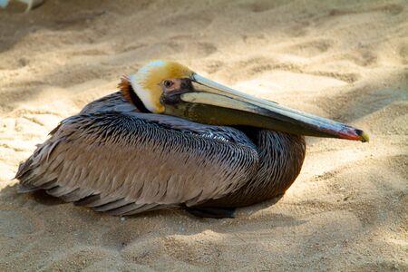 Pelican Rest Stock fotó