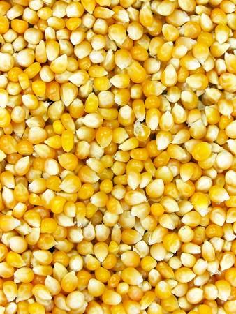 mais: Dried mais seeds Stock Photo