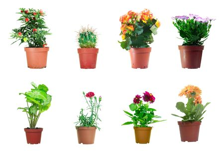 Several potted plants isolated over white background Stock Photo