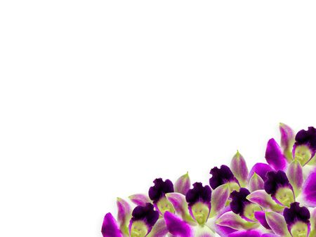 Corner made of purple orchids isolated over white background photo