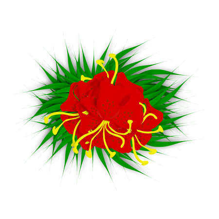 lilly pad: Illustration of red tiger lilies on green leaves over white background
