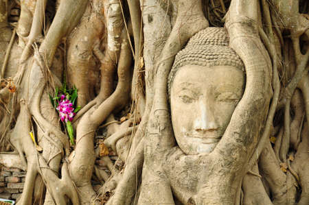 the head of the sandstone buddha image in roots of bodhi tree, Ayutthaya,Thailand