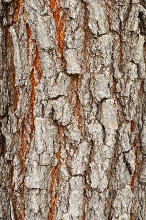 trama di legno