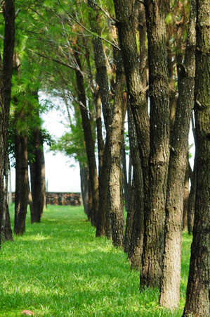 boles: green park