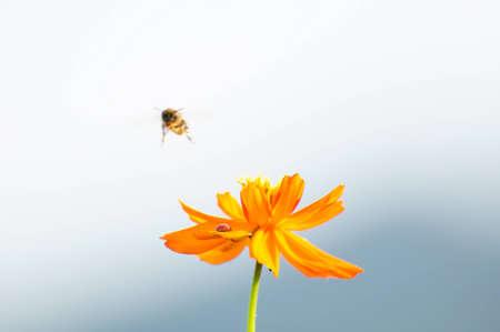 Bee e fiore Archivio Fotografico