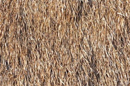 texture of grass roof, thailand Stock Photo - 8926104