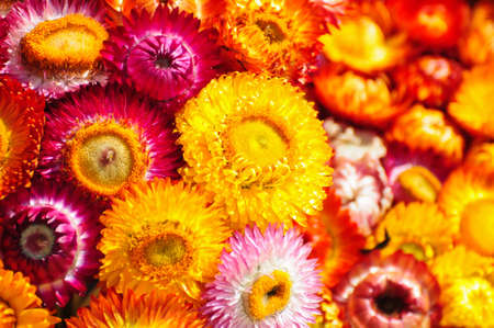 colorful flowers photo
