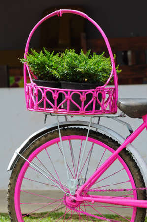 pink painted bicycle with a basket with Plants photo