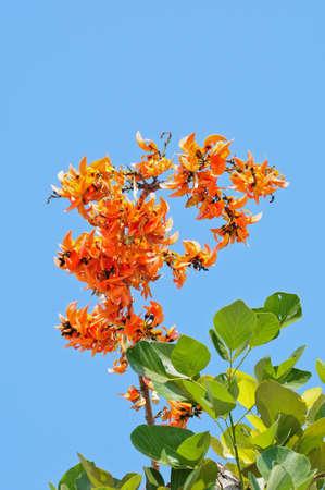 orange flower in thailand photo