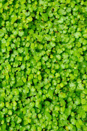 Green plant background photo