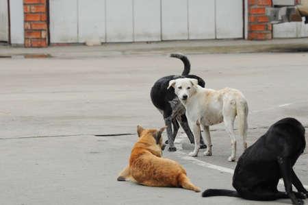 cani randagi sulla strada Archivio Fotografico