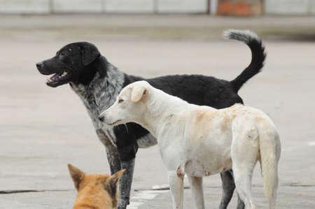 stray dogs on street photo