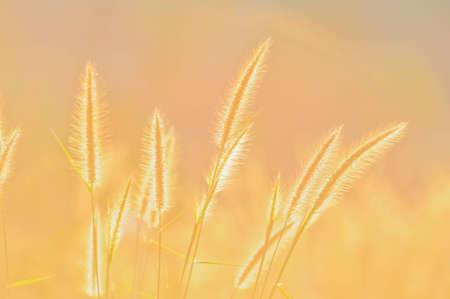 grass flower and sunlight