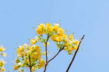a beautiful of yellow flower photo