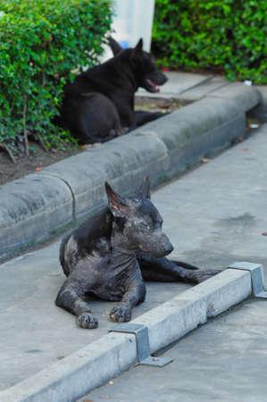 Stray dog in thailand photo