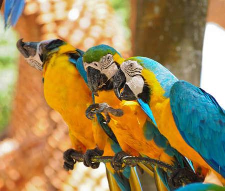 Pappagallo uccelli colorati seduto sul trespolo Archivio Fotografico