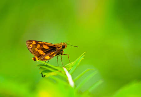 closeup of butterfly and green background Stock Photo - 10905295