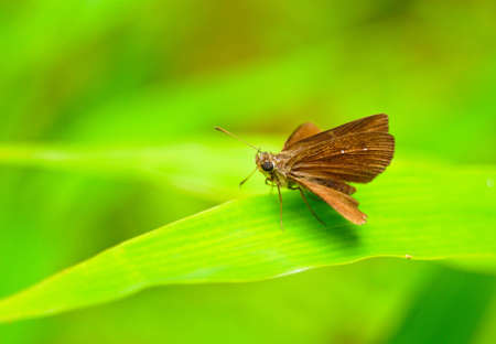closeup of butterfly and green background Stock Photo - 10905292