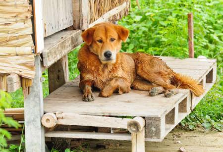 Stray dogs Stock Photo - 10905304