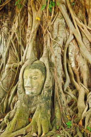 the head of the sandstone buddha, Ayutthaya,Thailand photo