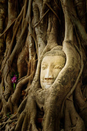 head of the sandstone buddha, at Ayutthaya Historical Park, Thailand photo