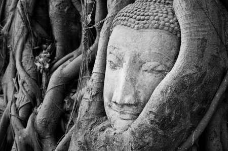 head of the sandstone buddha, at Ayutthaya Historical Park, Thailand photo