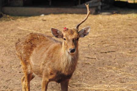 Deer had broken photo