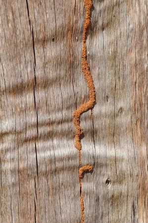 wooden line texture photo