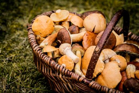 향긋하고 맛있는 삼림 버섯으로 가득 찬 커다란 바구니