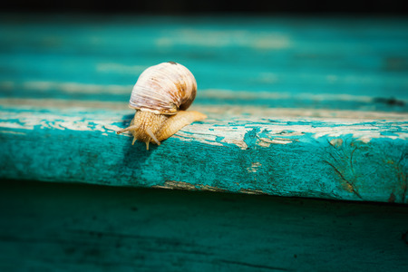 small snail approaches the edge of an old, blue-painted bench