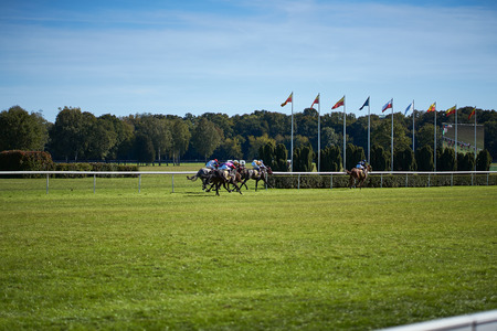 Riding horses on horse races against background of sunny sky