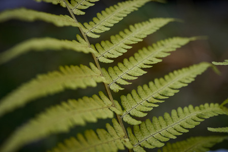Close up of green fern leaf in forest Banco de Imagens