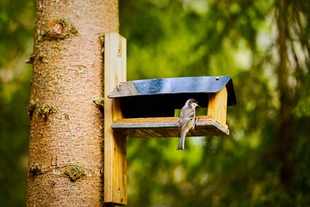bird eats the grain from the feeder in the summer forest