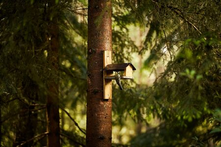 bird eats the grain from the feeder in the summer forest Standard-Bild - 149154524