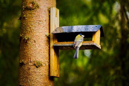 bird eats the grain from the feeder in the summer forest Standard-Bild - 149154259