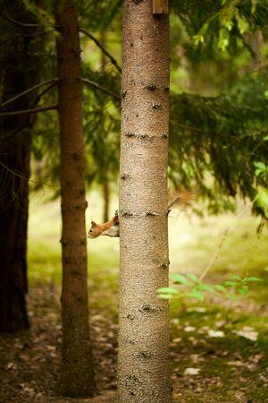 squirrel eats seeds from a bird feeder on a tree Standard-Bild
