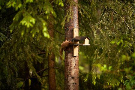 squirrel eats seeds from a bird feeder on a tree Standard-Bild - 149155486