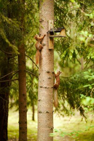 squirrel eats seeds from a bird feeder on a tree Standard-Bild - 149155870