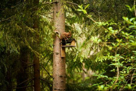 squirrel eats seeds from a bird feeder on a tree Standard-Bild - 149158819