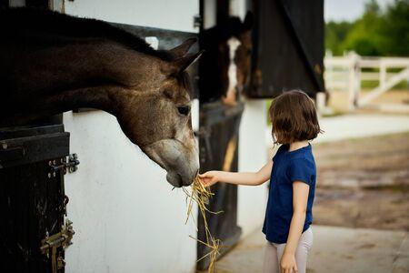 Little girl feeds a beautiful horse in the barn Standard-Bild - 149845483