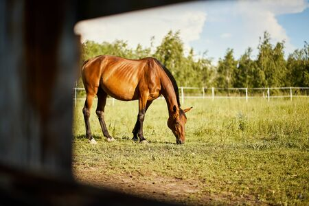 one beautiful horse on a meadow in summer Standard-Bild - 149842571